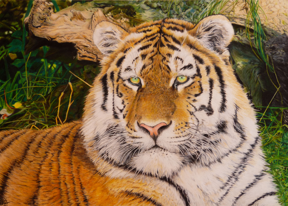 Tiger Colored Pencil Drawing, Farfbstiftzeichnung