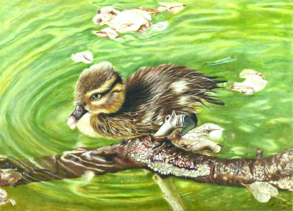 Entenküken realistische Farbstiftzeichnung, Duckling drawing