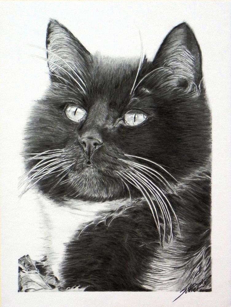 Realistic Cat Drawing, realistische Katzenzeichnung
