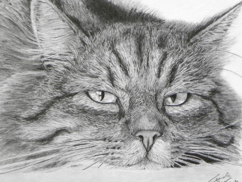 Realistic Cat Drawing, Katzenzeichnung